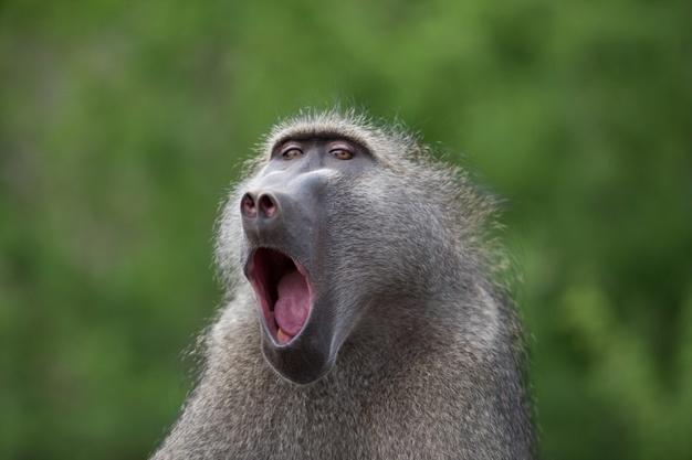 Monkey mouth